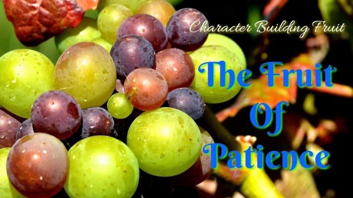 The fruit of Patience